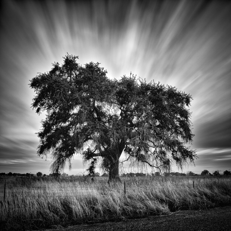 Grandfather Oak, Placer County, California