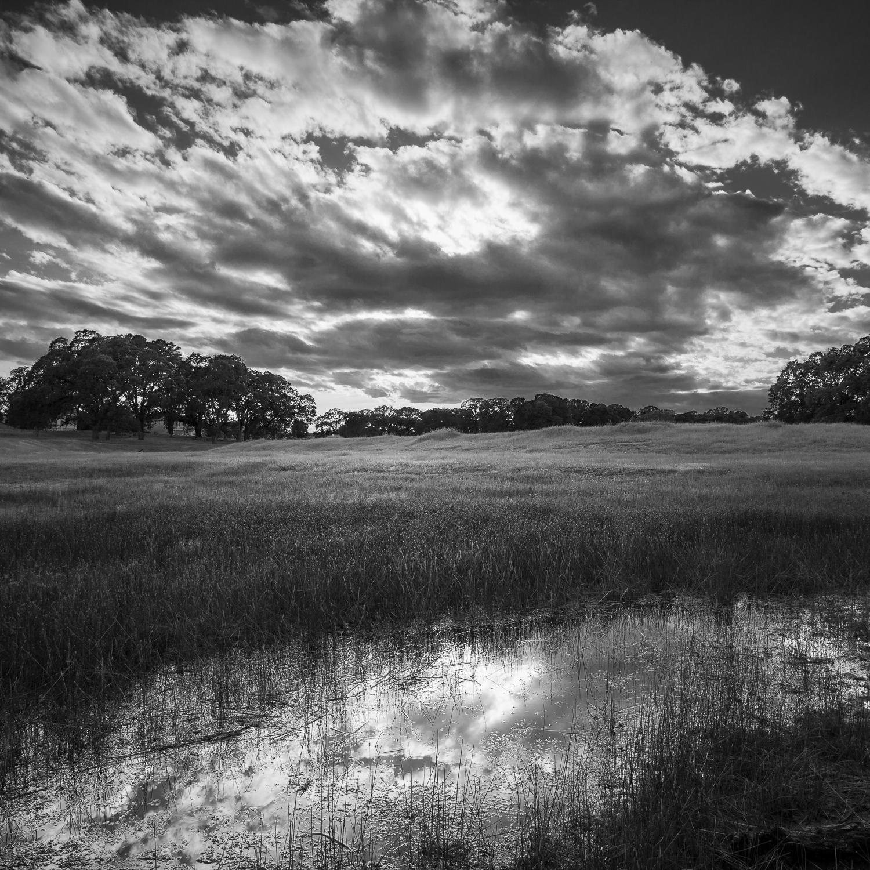 Late Spring Wetland