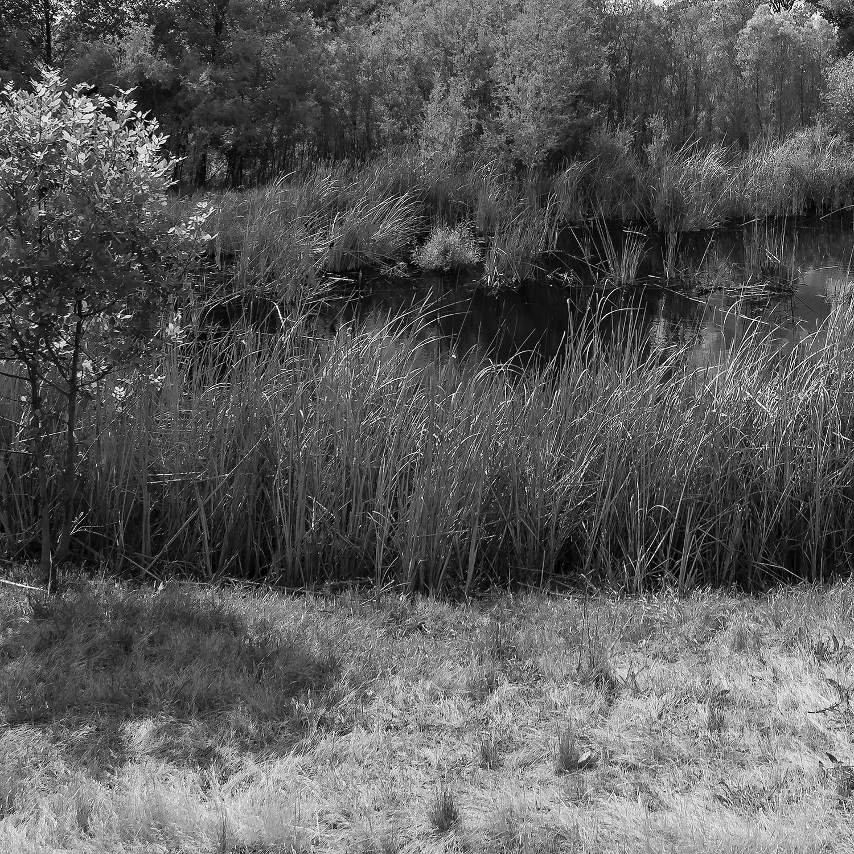 Ferrari Ranch Wetlands, Study 2, Detail