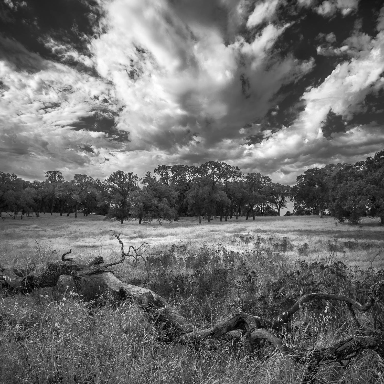 Summer Storm Over Fallen Oak