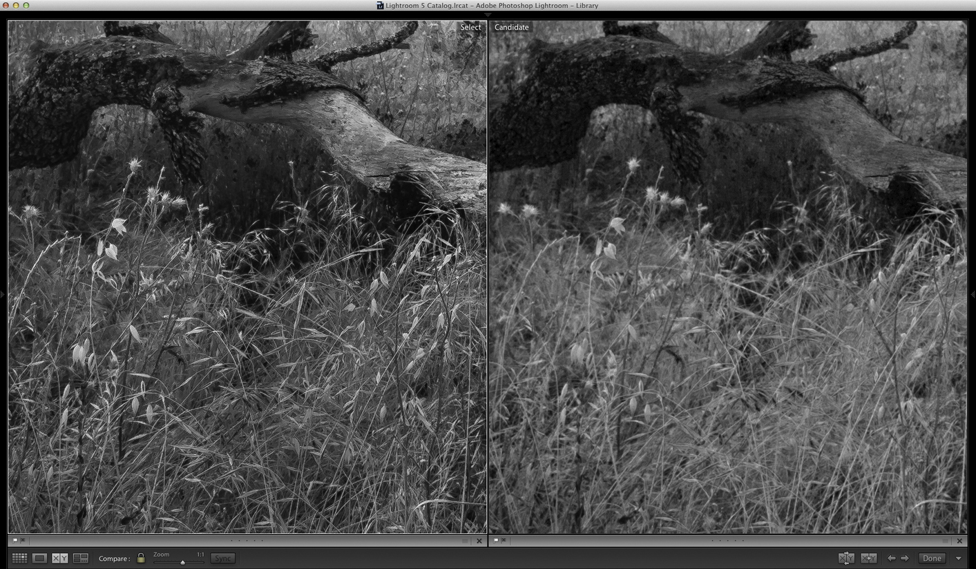 Lightroom (on left) showing improved detail and micro-contrast (click to view full size)
