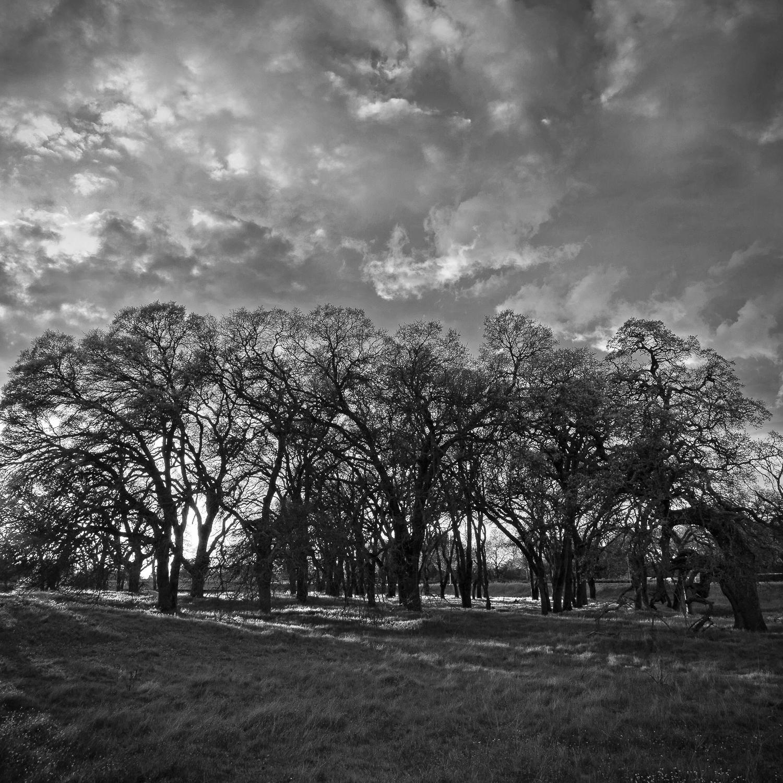 Westside Oak Forest, Study 3