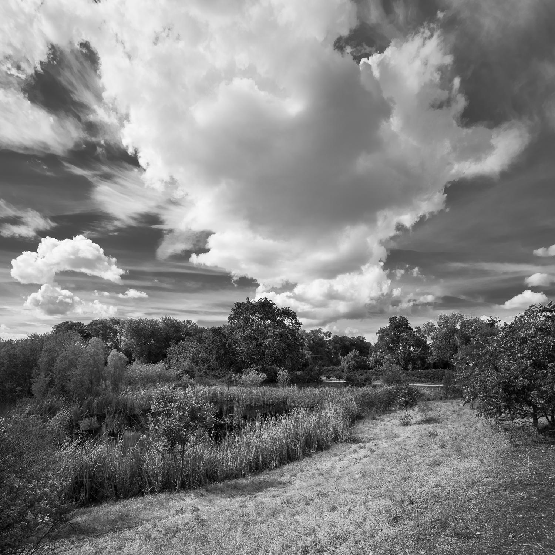 Ferrari Ranch Wetlands, Study 1