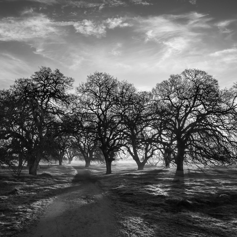 Path Through Oak Copse