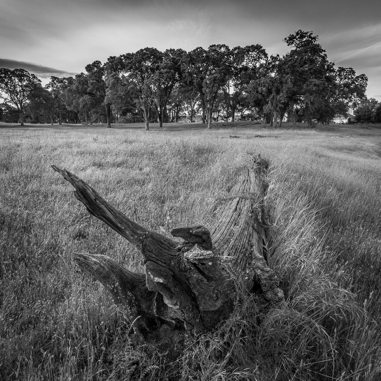 Fallen Timber in Field, Study 2