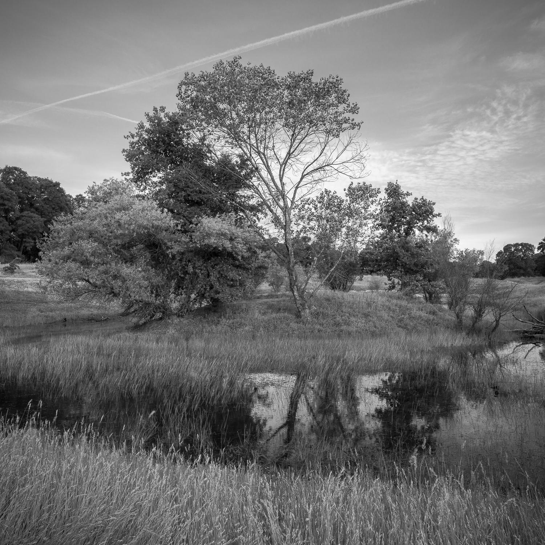 Last Wetland of Spring