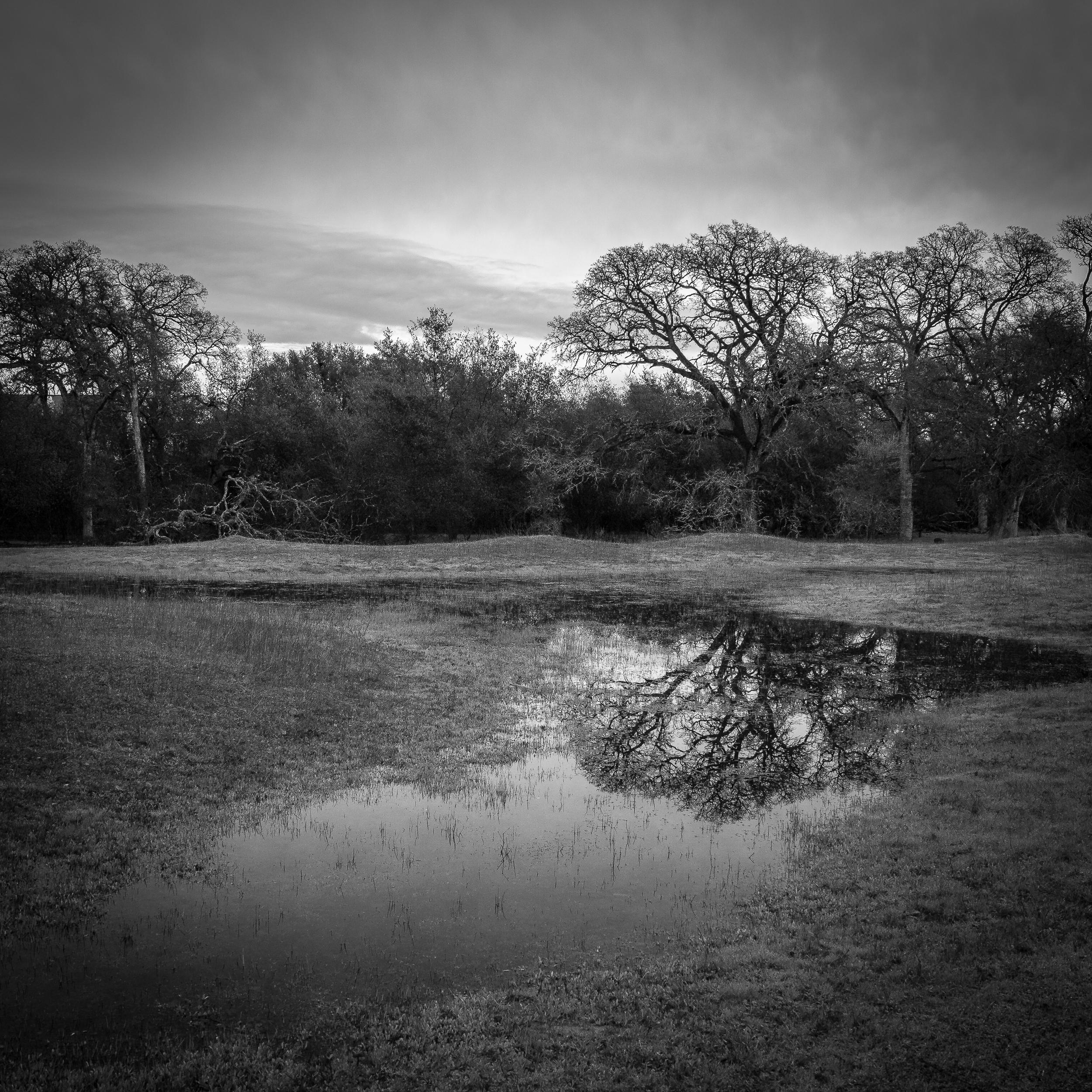 Ephemeral Wetland at Pleasant Grove