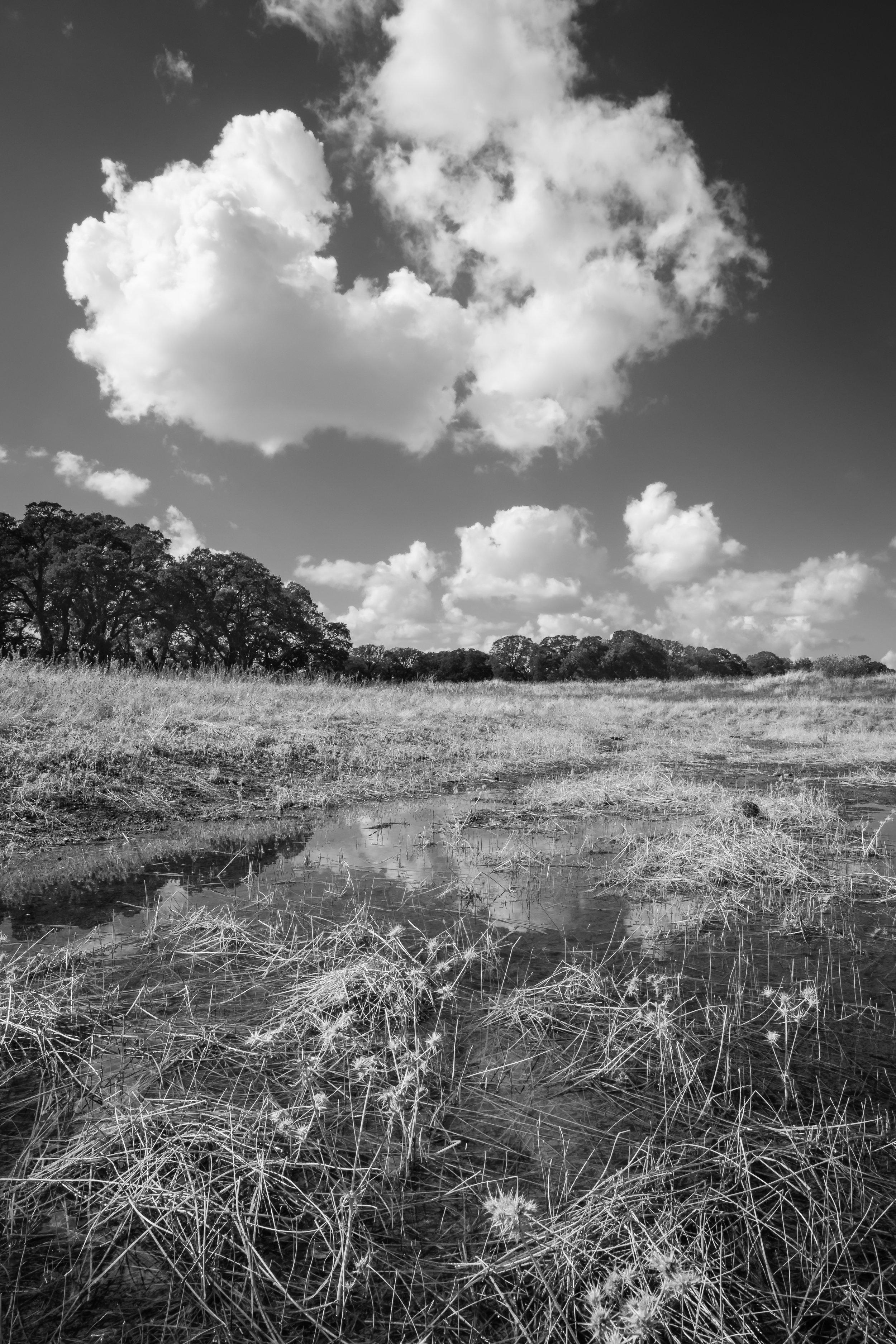 Early Season Wetland