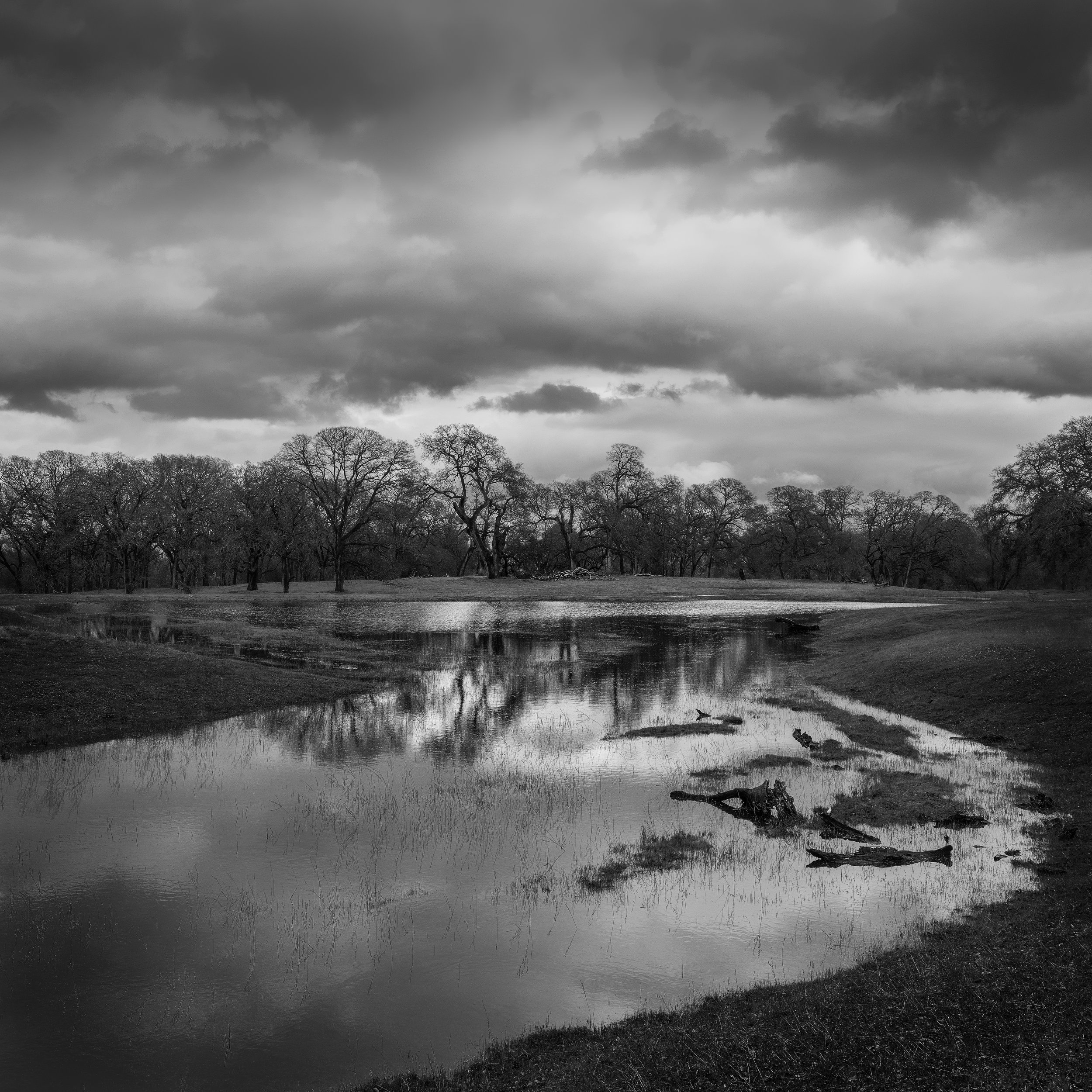 The Wetland at Branch Creek, Study 2