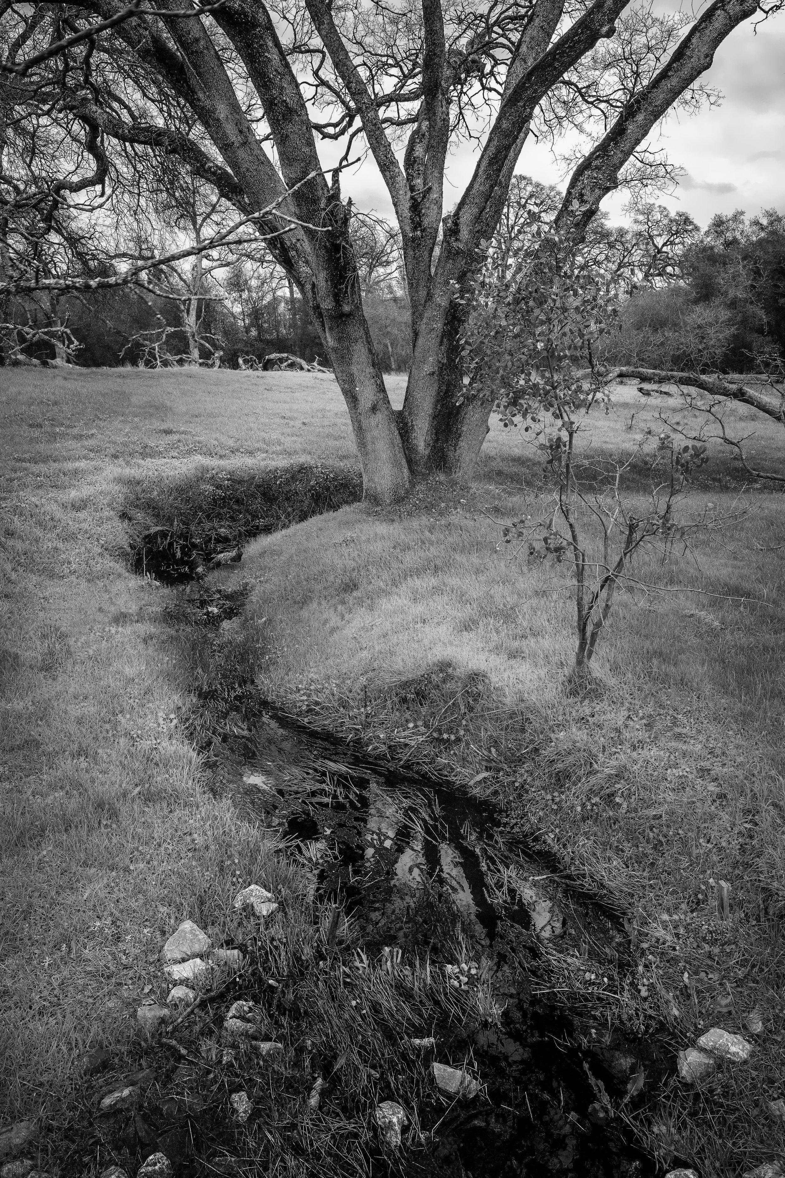 Triburaty to Branch Creek