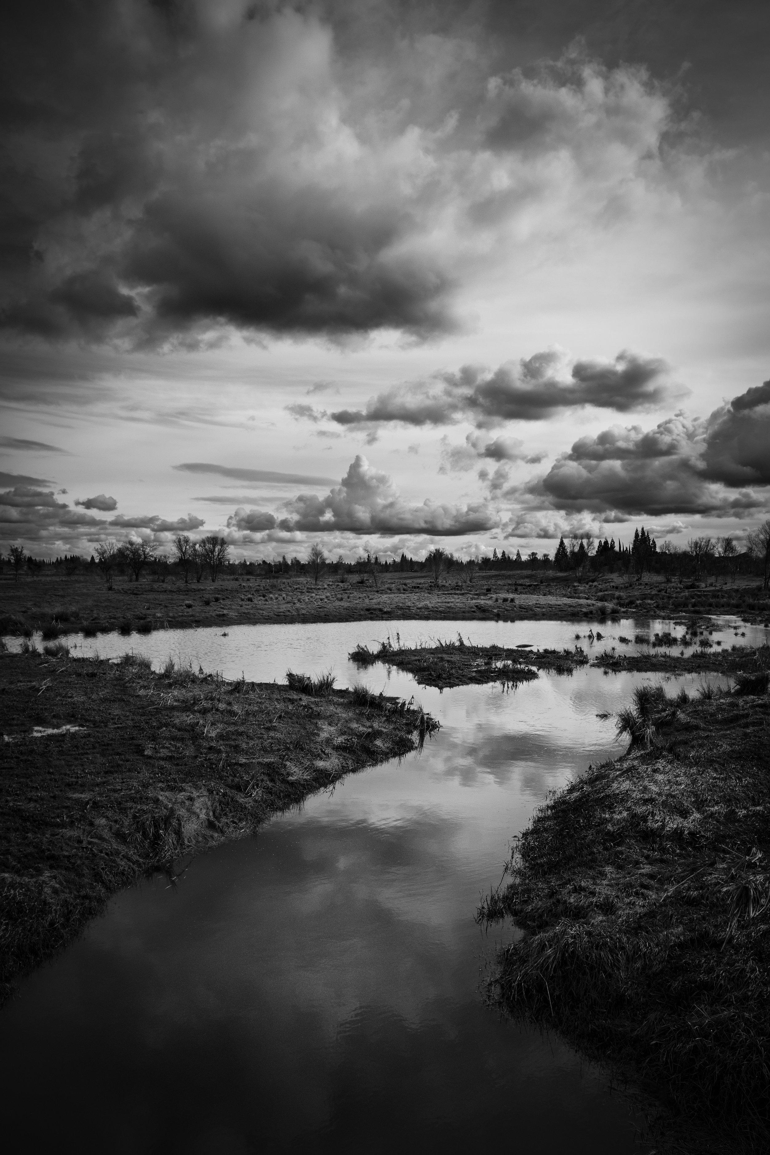 Mahany Wetlands #3