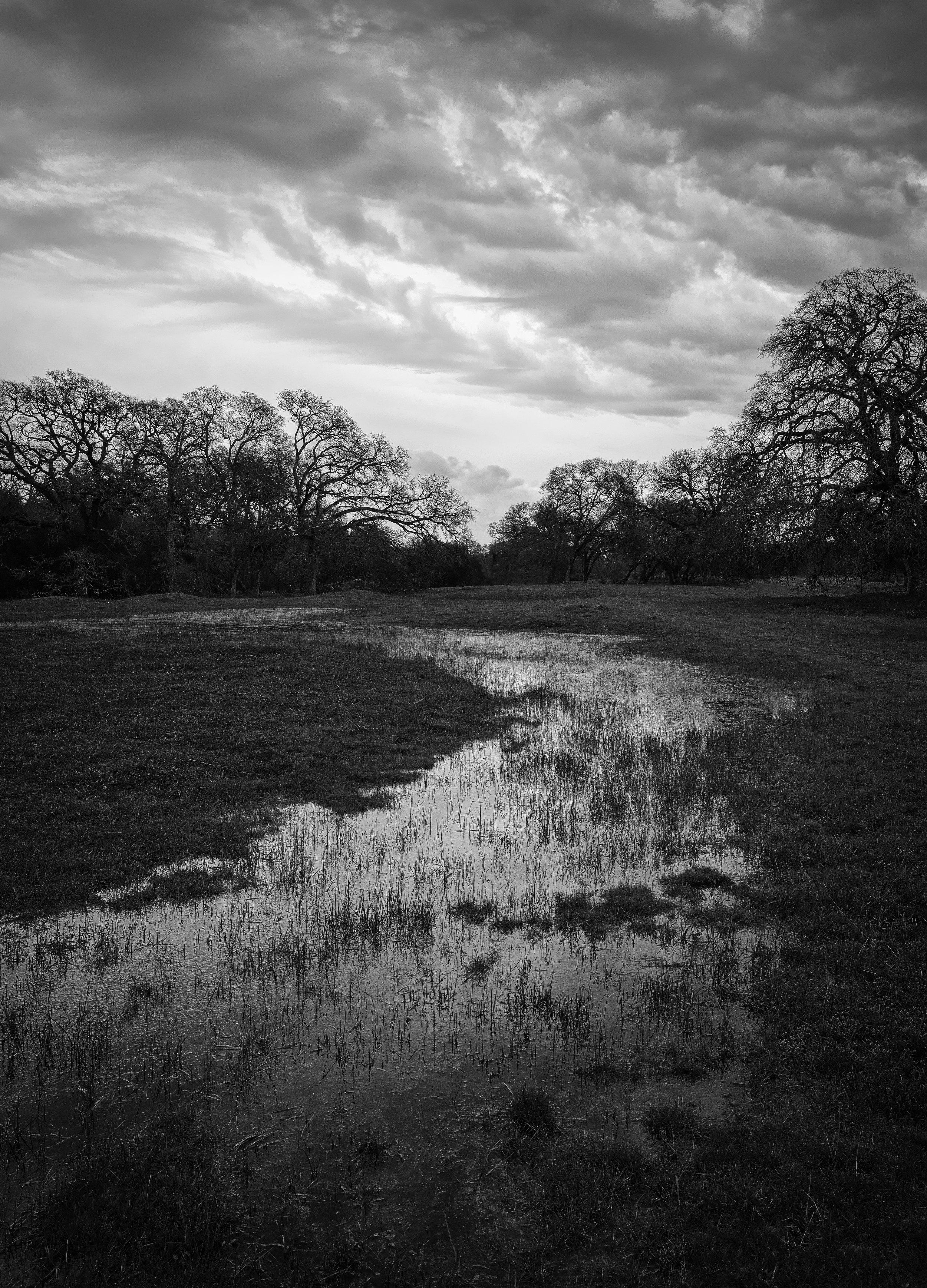 Ephemeral Wetland at Branch Creek