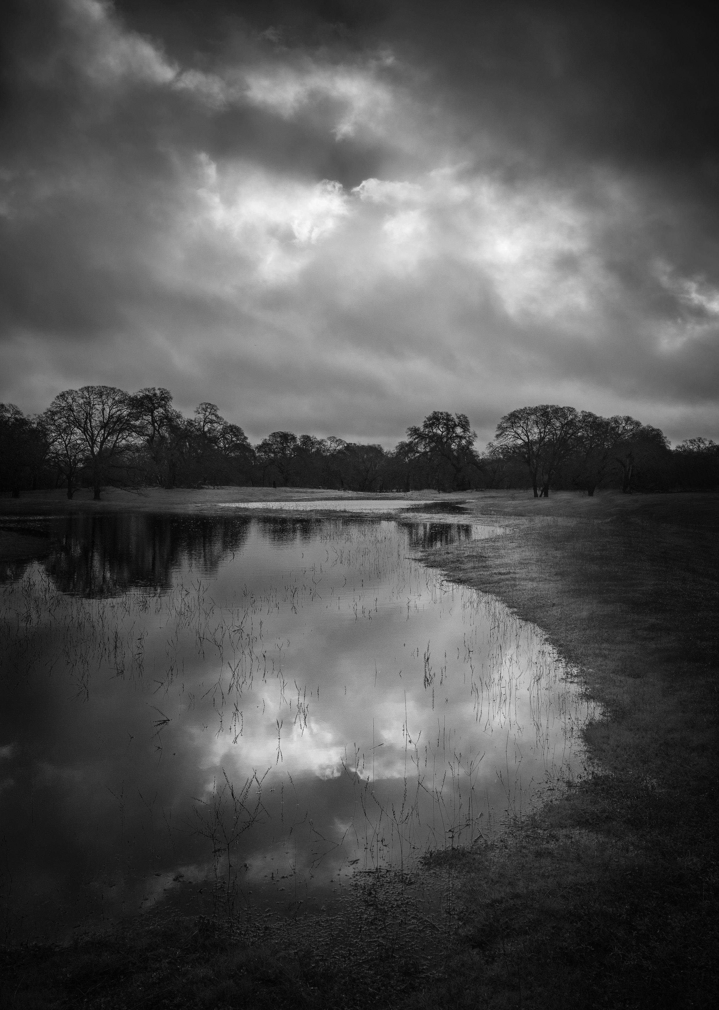 Ephemeral Wetland at Branch Creek, Study 3