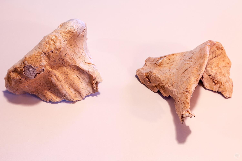 Krayt Dragon bones