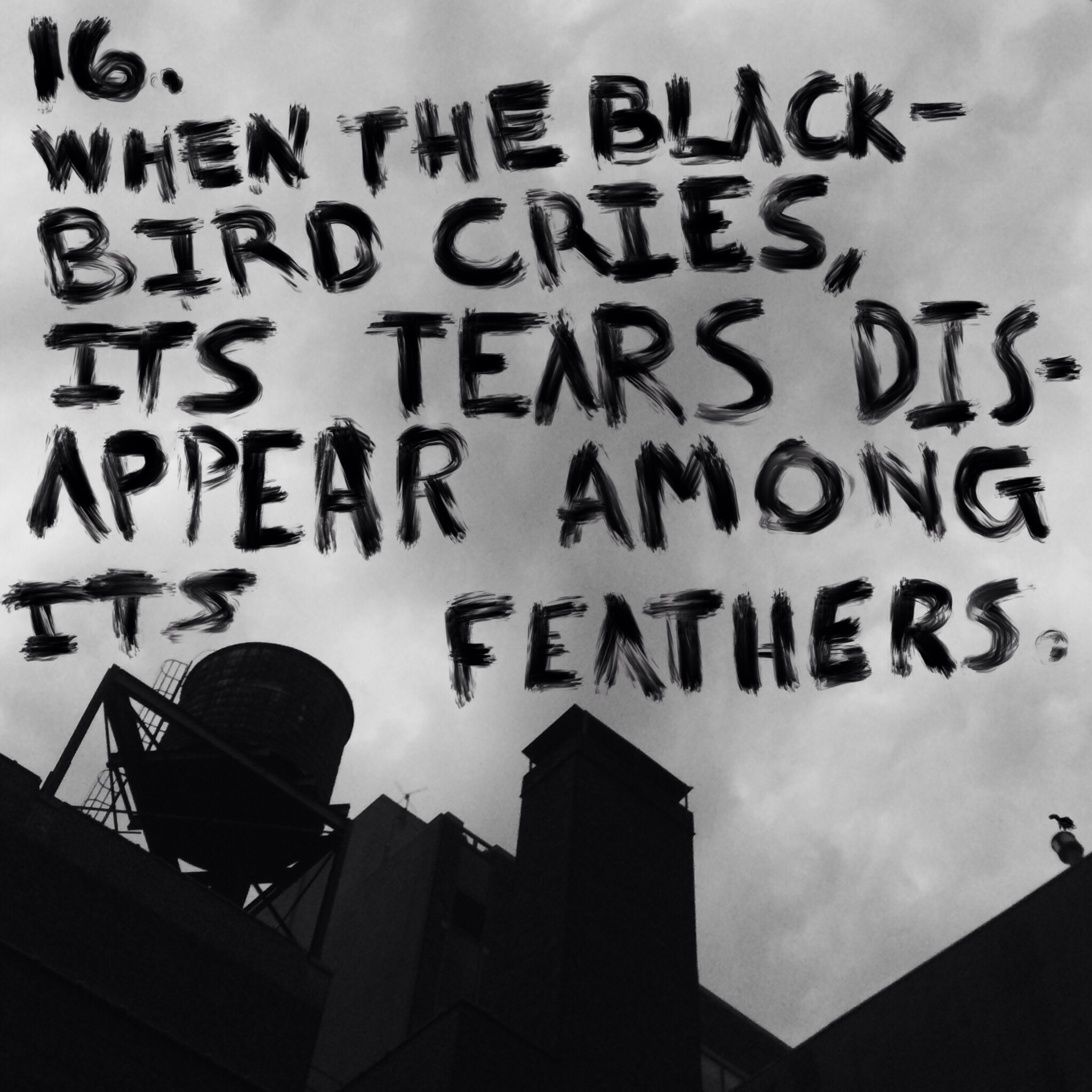 16.  When blackbird cries, its tears disappear among its feathers.