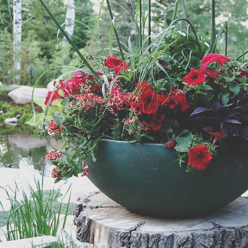 The Red Planter