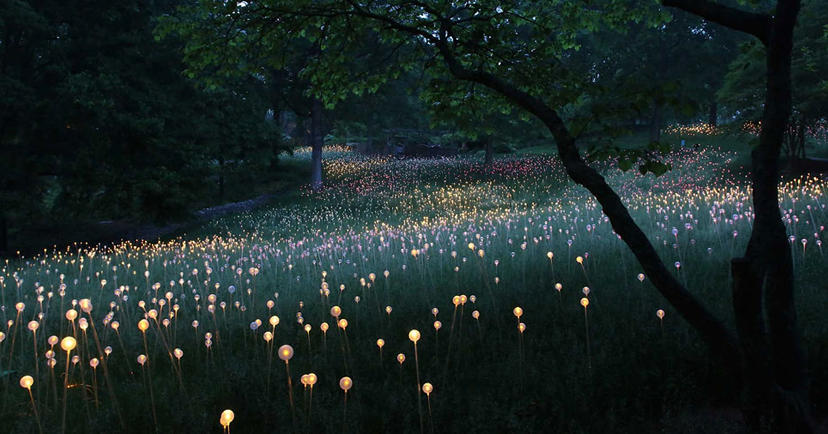 Cheekwood Museum and Gardens, Nashville, TN. Field of Light by Bruce Munro, 2013.