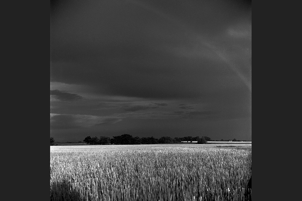 COMING_OF_THE_RAIN3.jpg