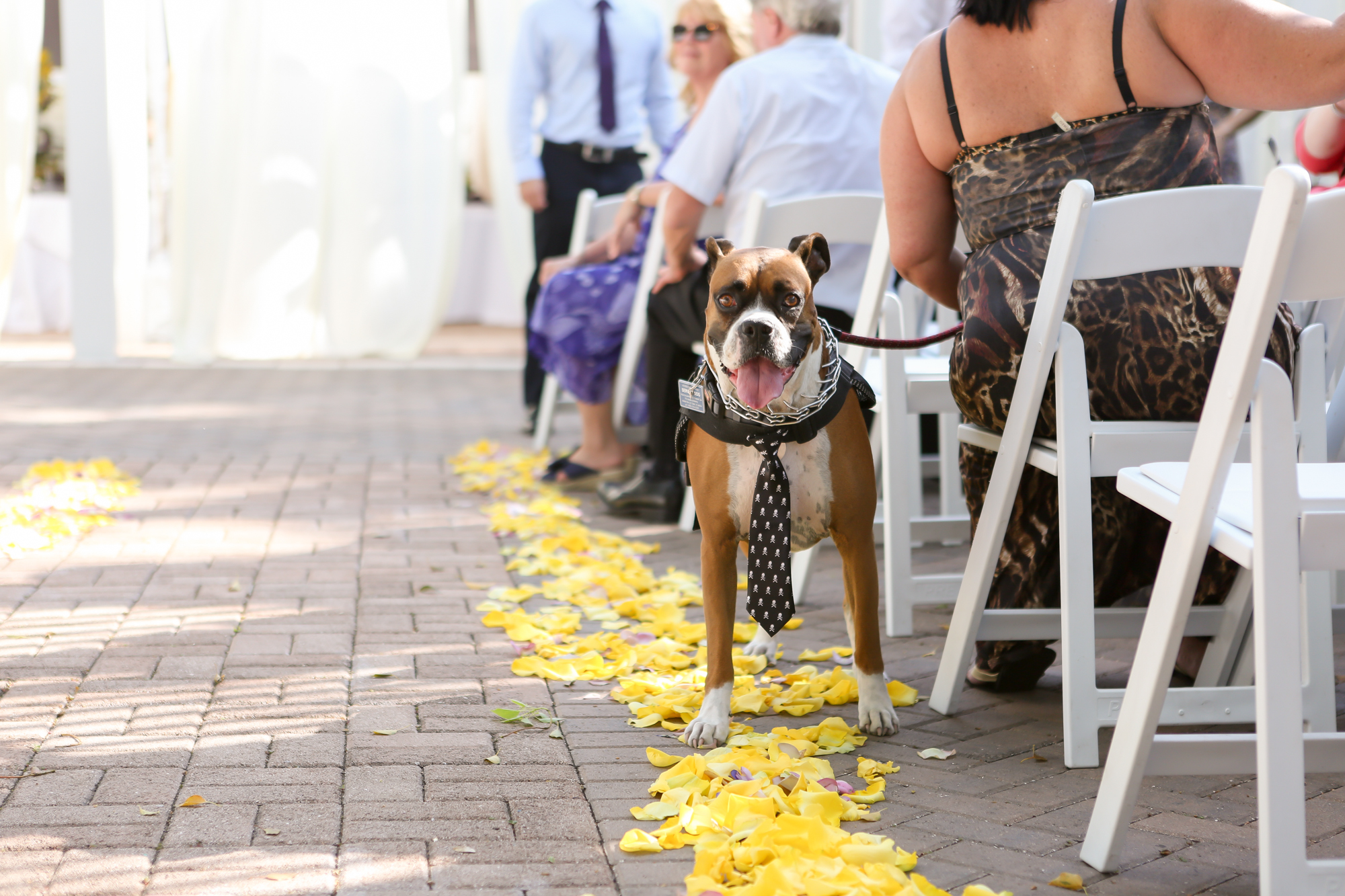 www.livehappystudio.com-intimtate-destination-orlando-wedding-photography-dog-boxer-19.jpg