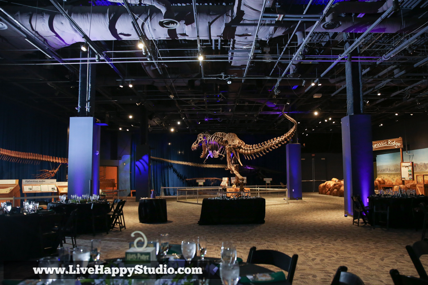 orlando-science-center-wedding-photography-live-happy-dino-digs-18.jpg