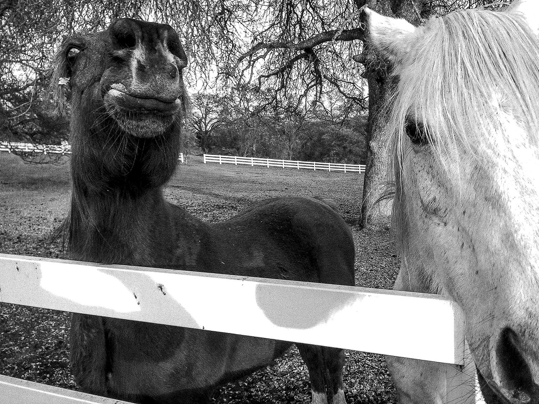 B&W Horses.jpg