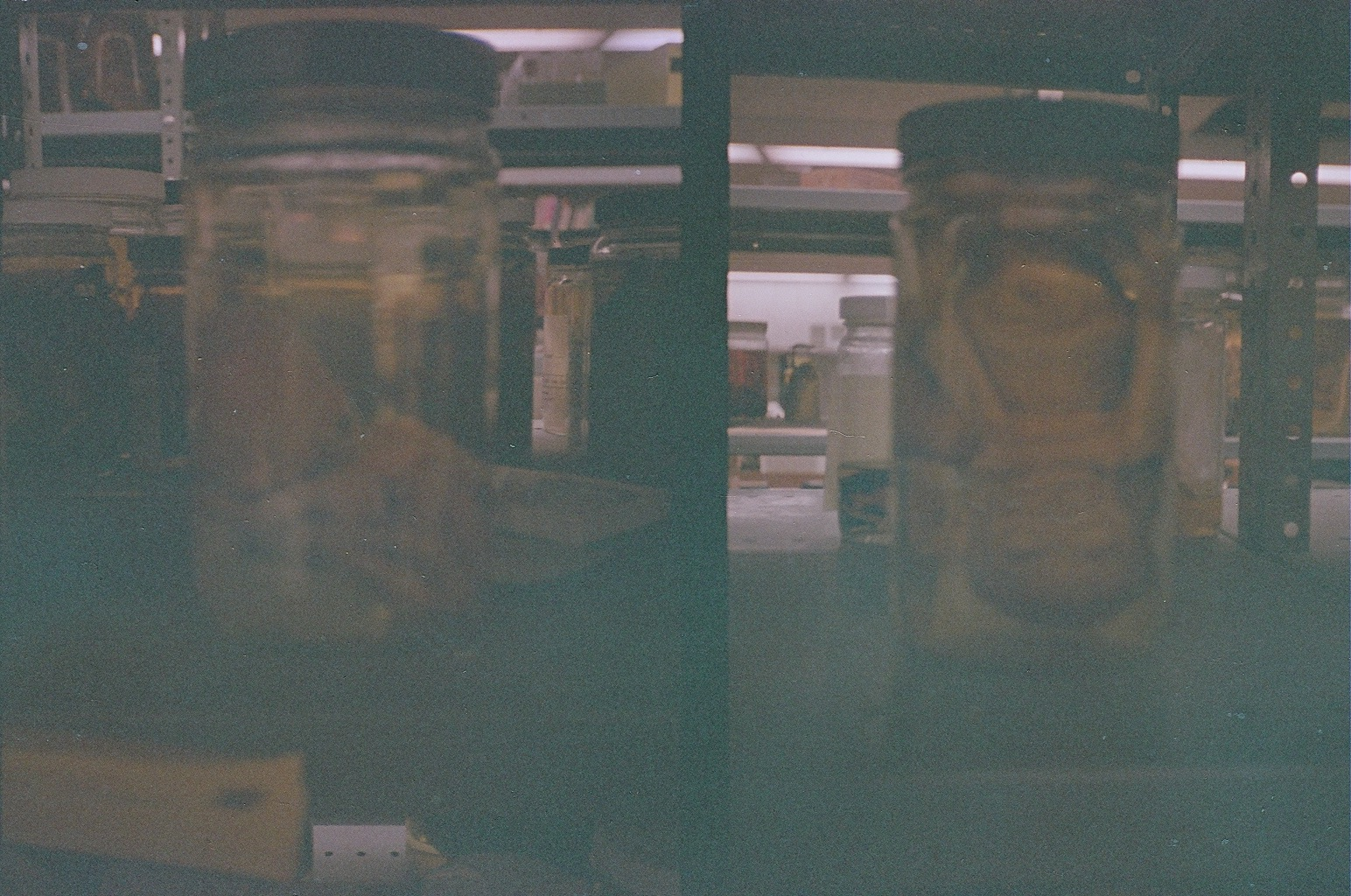 Left: human fetus. Right: chimpanzee fetus. Taken at the Field Museum, October 2013. Canon Demi (half-frame) camera with expired film - excuse the dark exposure.