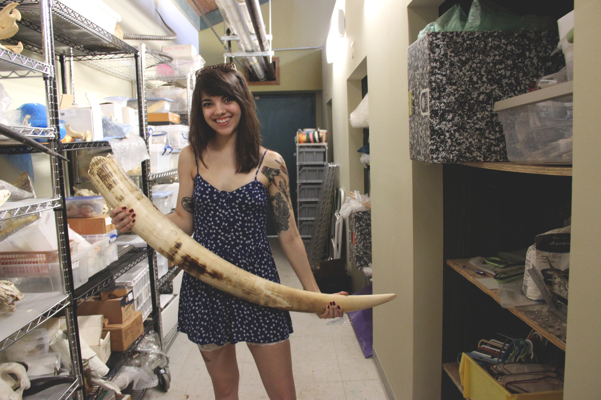 Posing with an elephant tusk in the educational archives of the Audubon Zoo - April 2014.