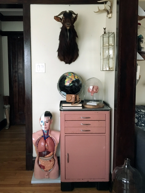 An anatomical torso model, vintage dental cabinet (with milk glass trays in the drawers!), goat taxidermy, pregnancy anatomical model in a glass dome, starlight globe, a few books and cameras, and a little mirrored glass case I use for displaying an assortment of small skulls.