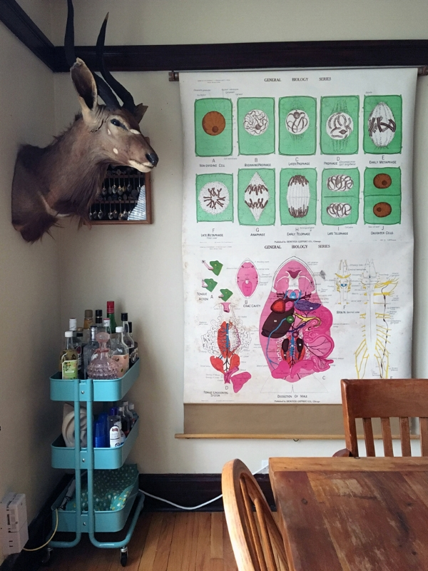 Vintage cell and frog dissection chart, taxidermy nyala, and on the bar cart is a beautiful pink glass Depression-era whiskey decanter. My dining chairs are also from estate sales.