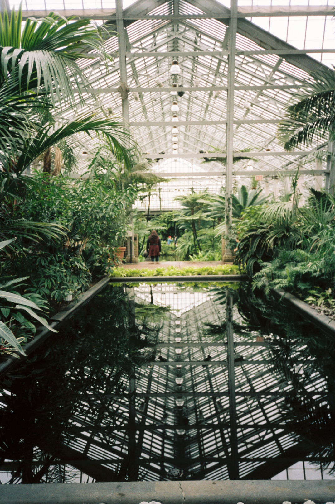 Garfield Park Conservatory shot on  Portra 160  with  Yashica T4