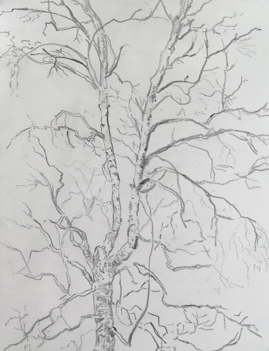 Tree 03   Graphite on paper, 10.6 in. x 13.8 in. 2013