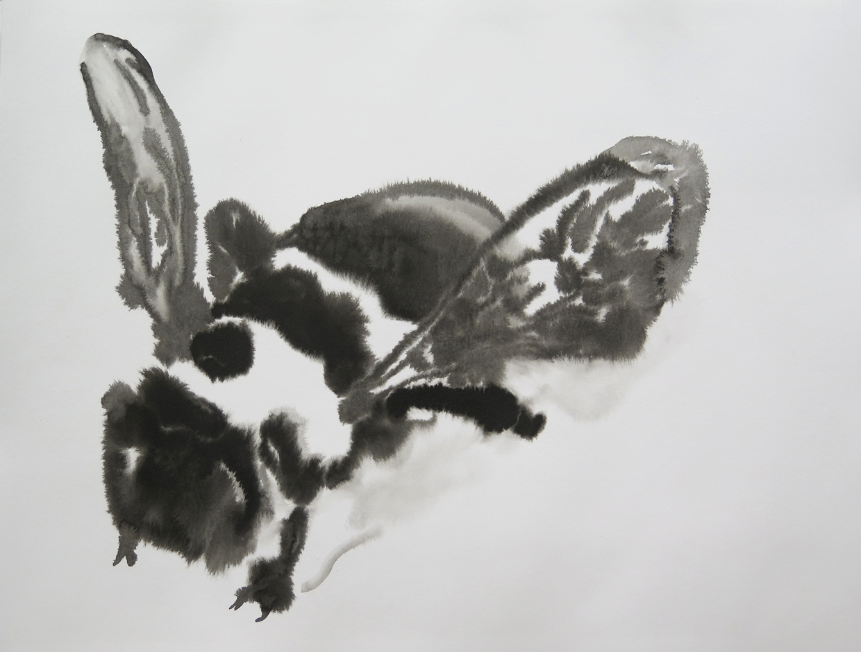 Bee 04   Ink on paper, 10.6 in. x 13.8 in. 2013