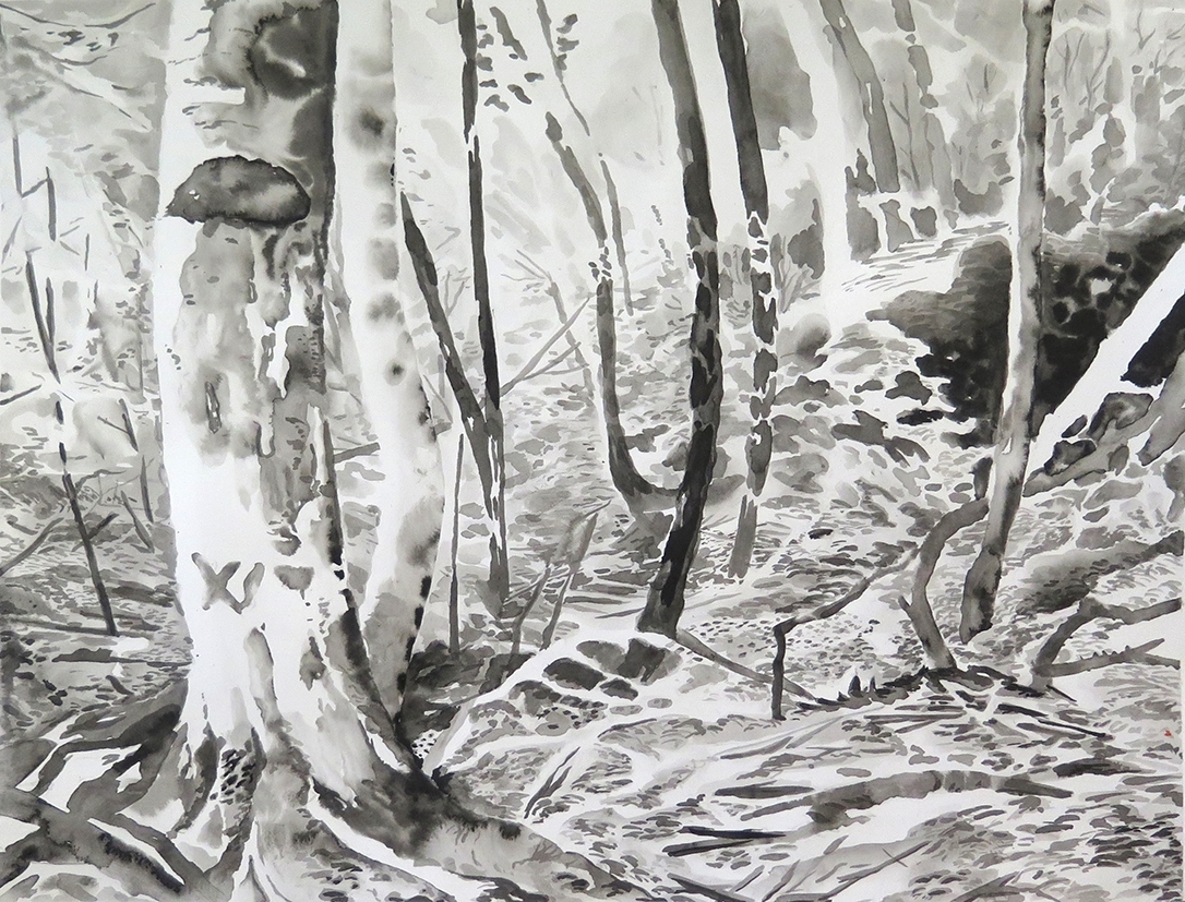 """""""Forest Outside Graz""""Ink on paper, 11"""" x 14"""", 2014."""