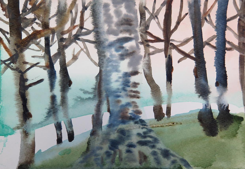 Birch on mount royal small.jpg