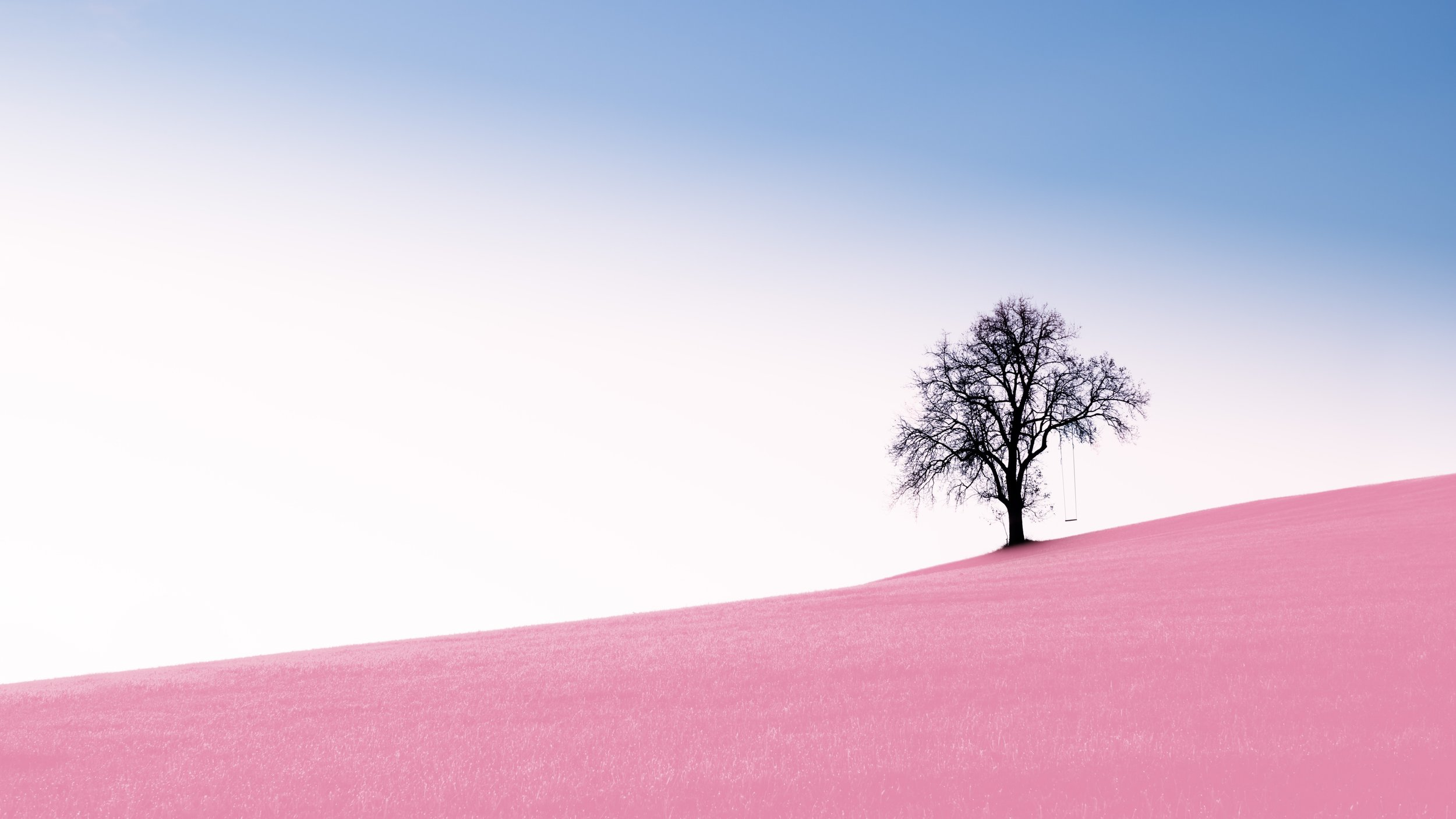 tree on desert.jpg