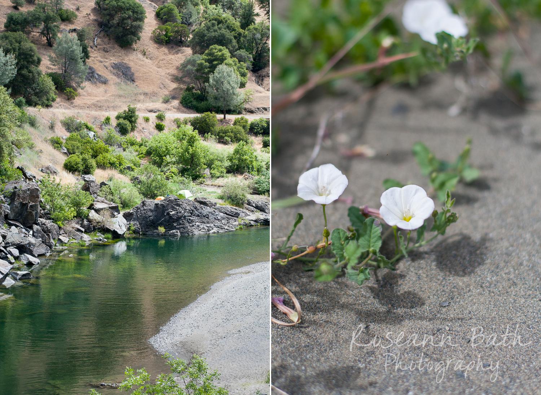 eel river wildflowers