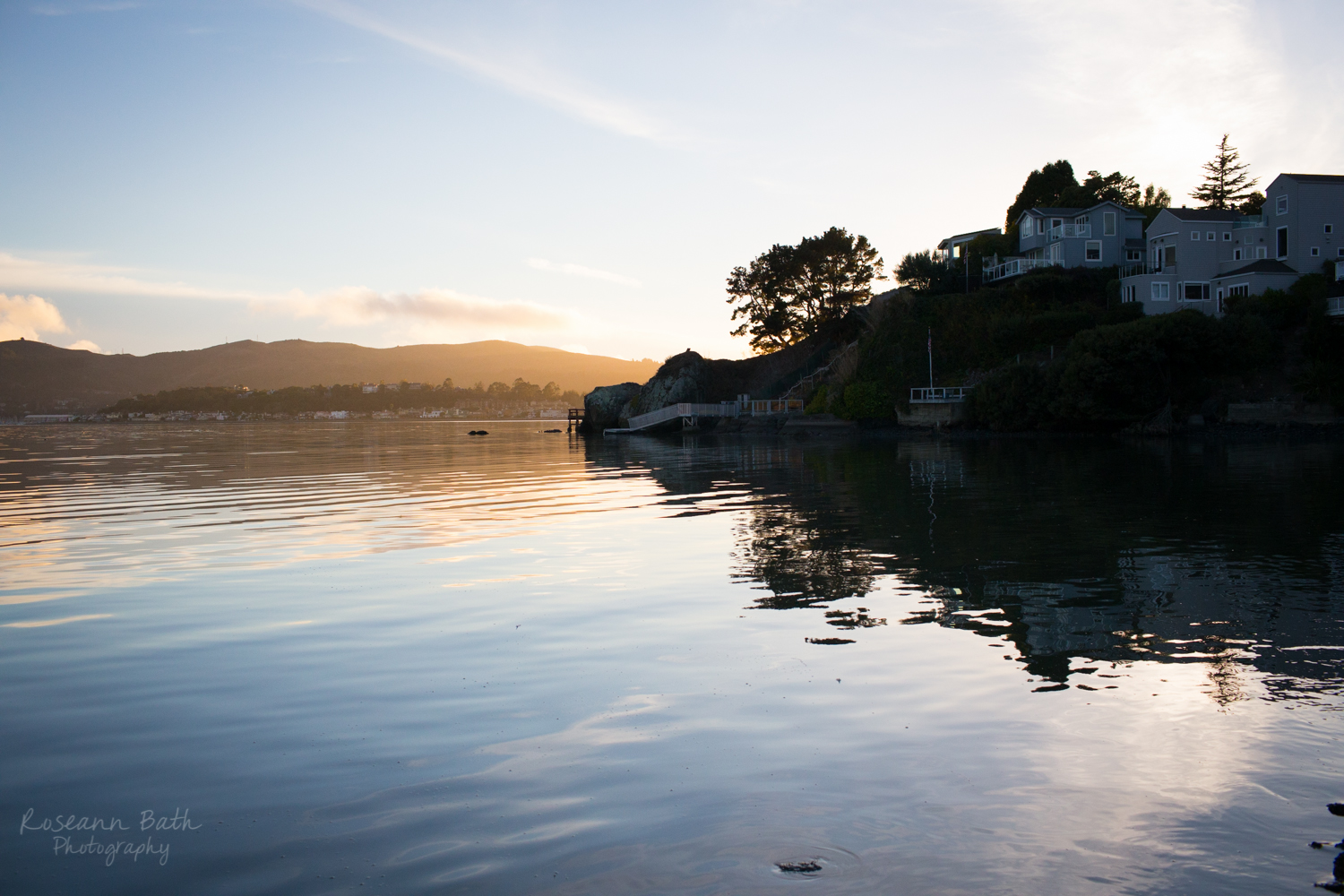 Tiburon | Roseann Bath Photography