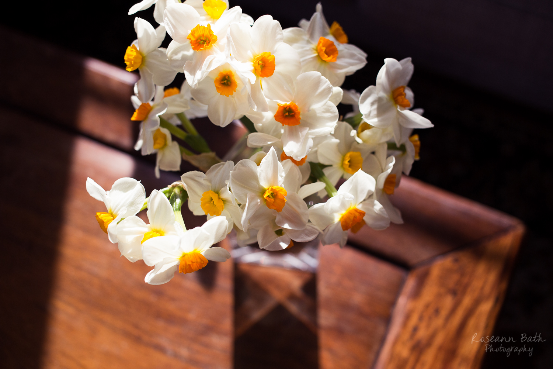 daffodils birds eye view