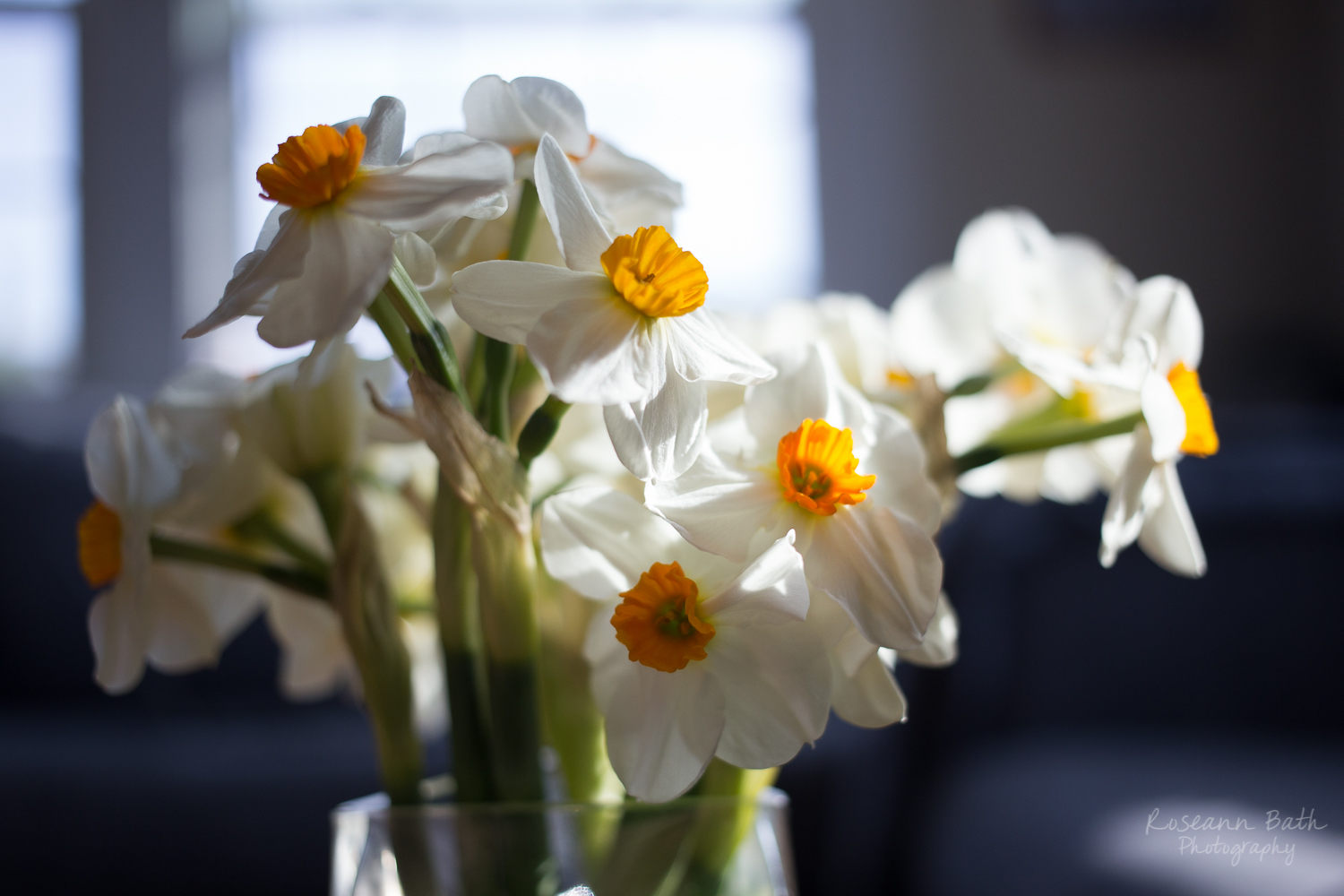daffodils in the afternoon