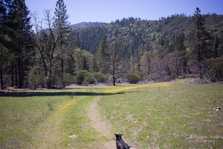 wildflower lane