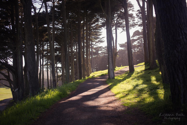 eucalyptus shadows
