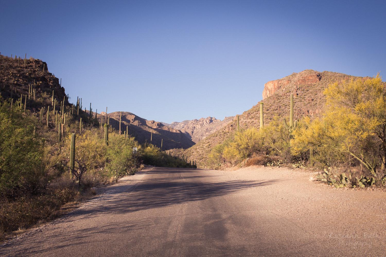 sabino canyon hike