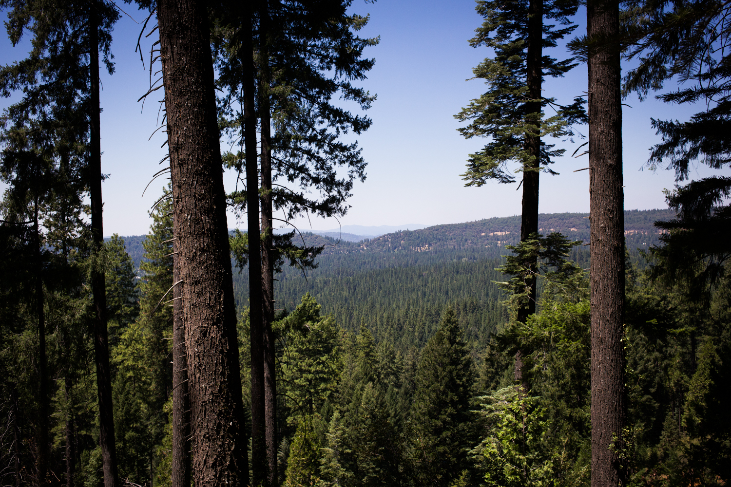 View from Gracie Ditch hike, Nevada City, CA