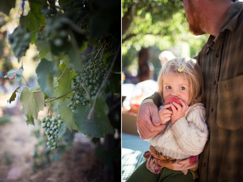 grape vines and peaches