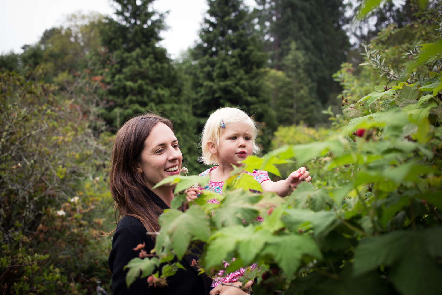 picking berries, bay area family portrait photographer