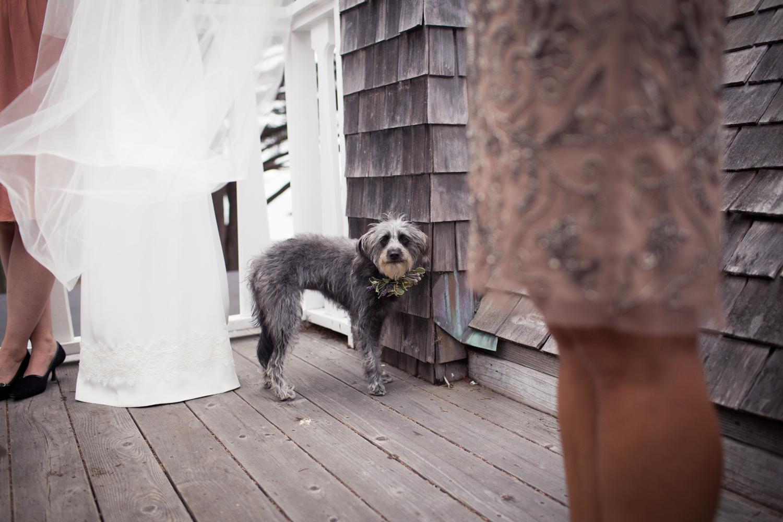 edie the pup