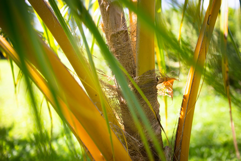 hilo photographer palm