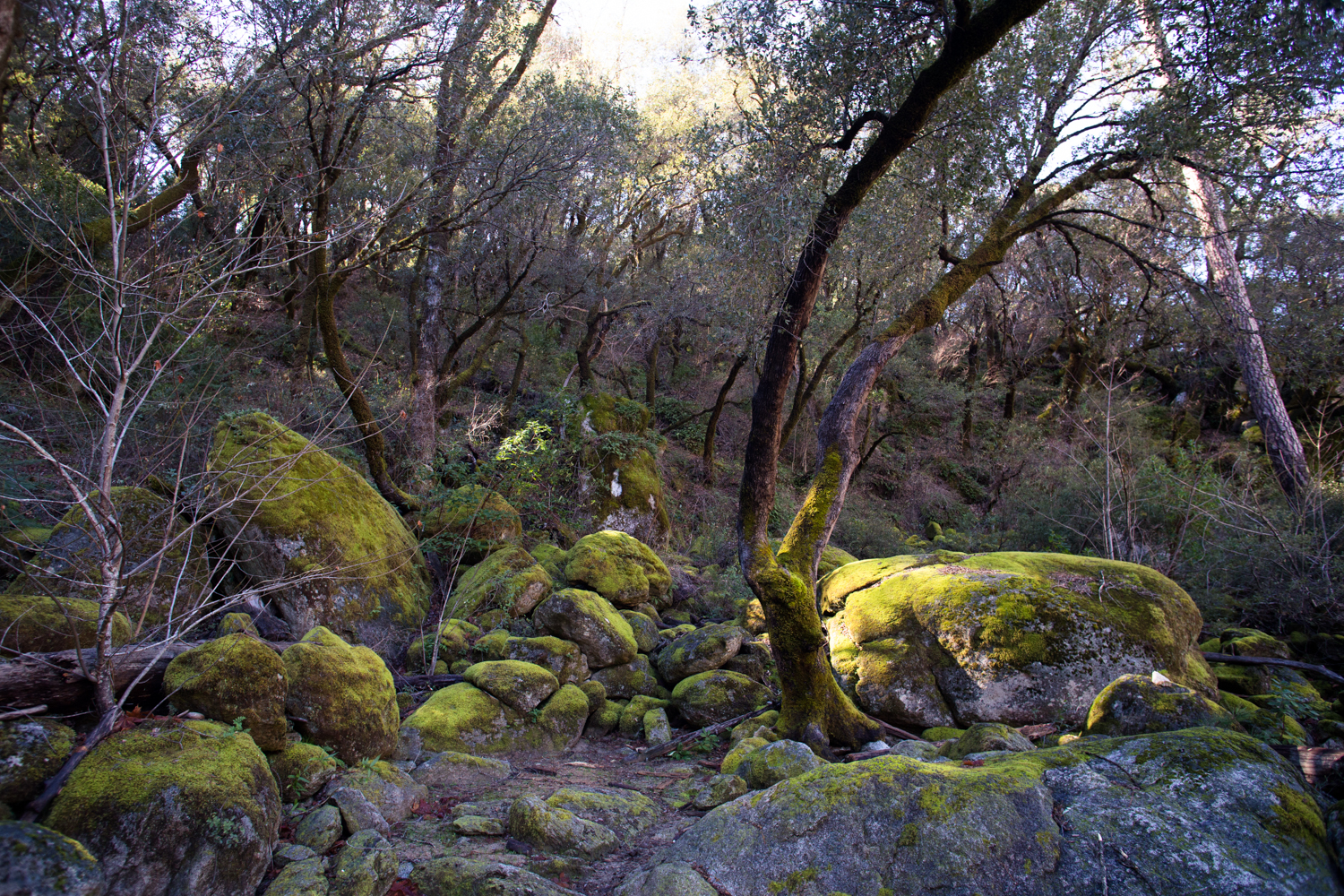 south fork of yuba river valley
