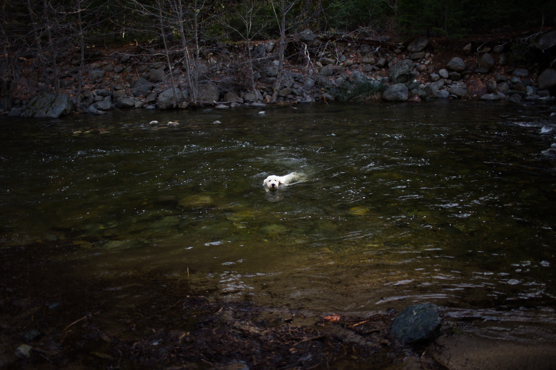 swimming pup
