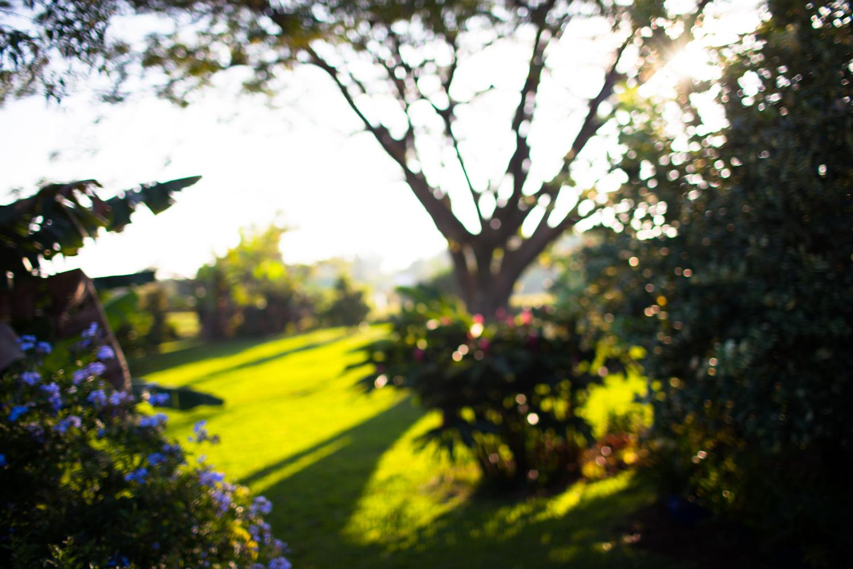 morning light in mariah's garden